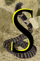 Letter S superimposed on a striking cobra